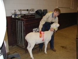 Adam Reed and Royal White Show Lamb